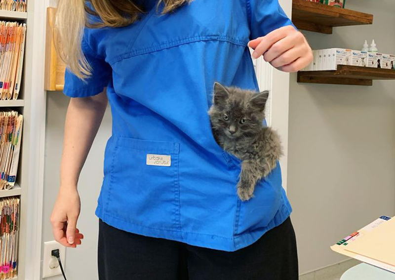 Kitten Veterinary Care, Millis